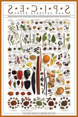 SPICES AND CULINARY HERBS Cooking Kitchen Food WALL POSTER b